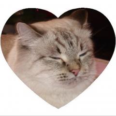 Pon Pon Cat
